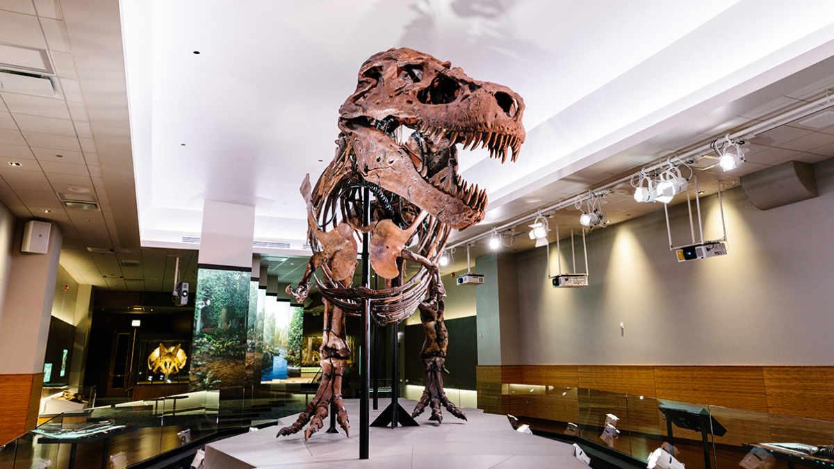 Lightswitch setzt T-Rex Sue mit ETC ins Licht